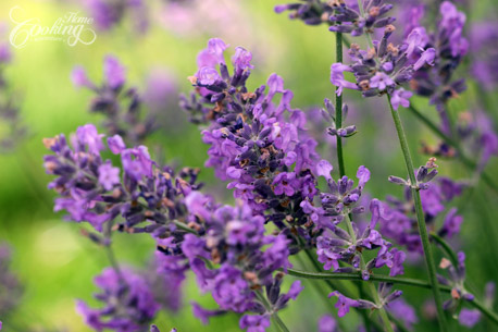 lavender_lemonade_step1